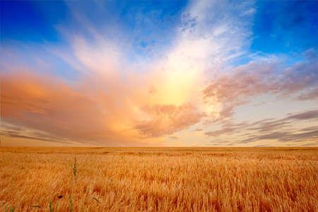 夏の終わり - copyspace の多くの田舎の日没