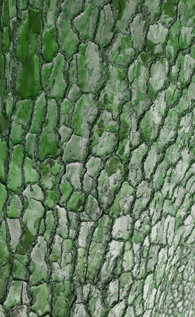 A tree bark in Africa Stock Photo - 7466162