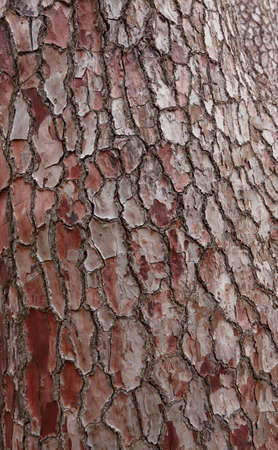 A tree bark in Africa Stock Photo - 7466158