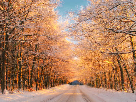 Sunset in winter - forest, road and warm color