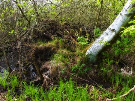 A wild and dark sump forest wilderness Stock Photo - 7465649