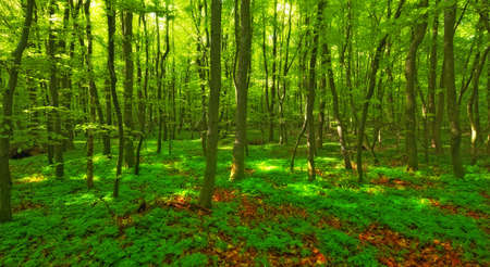 early summer: Danish forest in springtime Stock Photo