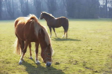 A beautiful  brown horse on a green field photo