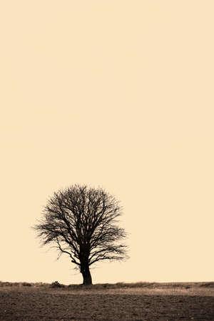 Ein einsamer Baum auf ein Feld