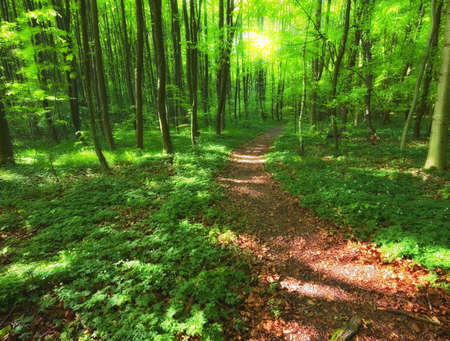 Forest beauty in lush green - springtime