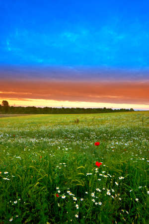 A photo of summer sunset - extreme DOF (tilt/shift lens used) Stock Photo - 8412744