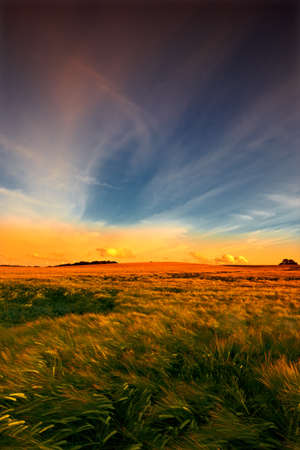 The countryside at sunset