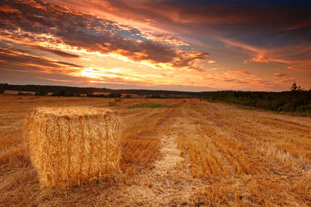 clouds making: harvest sunset at the countryside