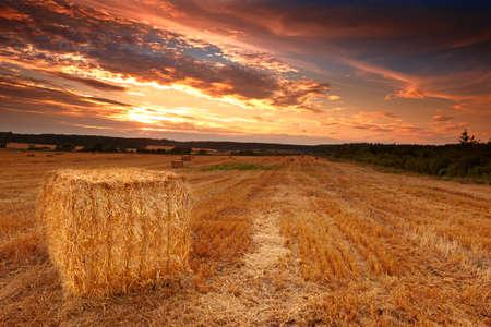 haciendo pan: puesta de sol de cosecha en el campo