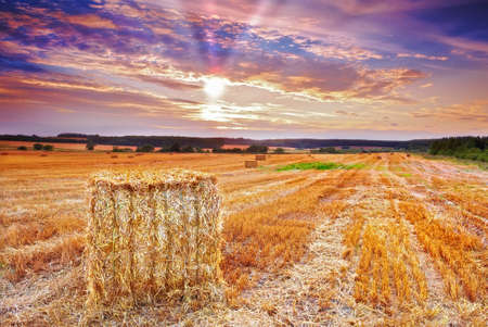 harvest sunset at the countryside photo