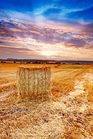 A photo of harvest sunset at the countryside photo