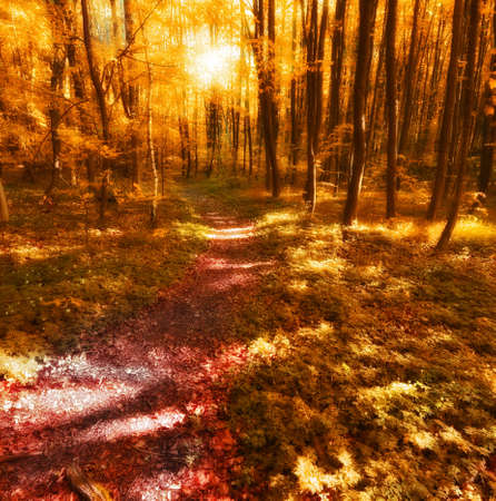A  photo of sunset in the forest at autumn photo