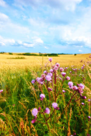 A photo landscape and countryside photo with extreme DOF (tilt/shift lens used) Stock Photo - 9937966