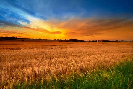 Ein Foto von Sommer Sonnenuntergang - extreme DOF (Tilt  Shift-Objektiv verwendet werden)