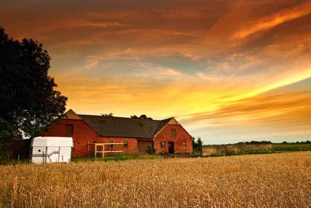 animales de granja: una foto de una granja danesa de edad en la puesta de sol