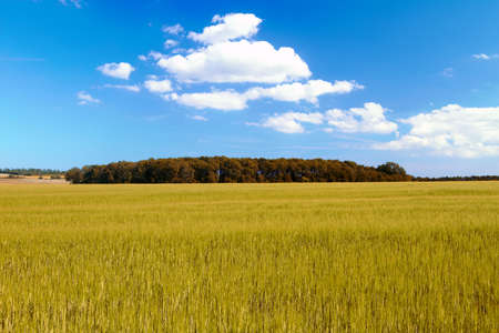 A photo landscape and countryside photo with extreme DOF (tilt/shift lens used) Stock Photo - 9937965