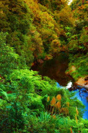 A photo a Rainforest in New Zealand