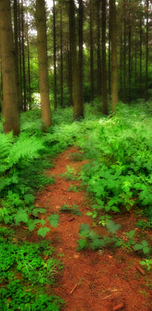 early summer: A photo of lush and saturated forest
