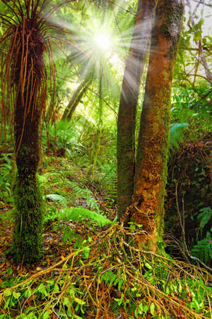 A photo of the rain forest in New Zealand Stock Photo - 10722689