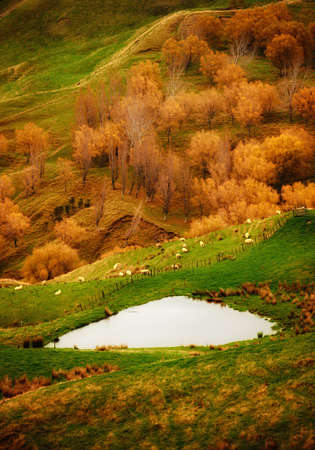 a photo of Autumn landscape in New Zealand photo