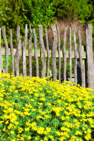 mantle: A photo of a fence, flowers, blue sky and garden