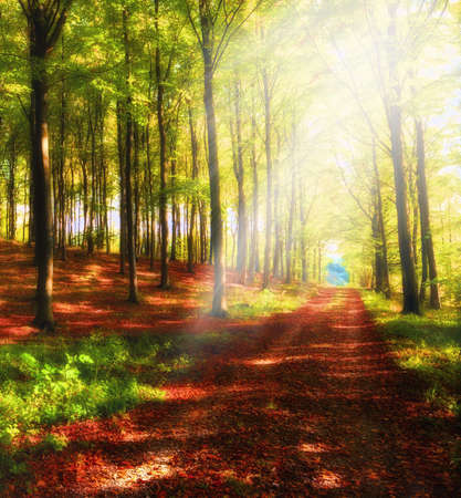 A photo a Autumn forest and sun Stock Photo - 10720850