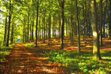 A photo a Autumn forest and sun Stock Photo - 10722465