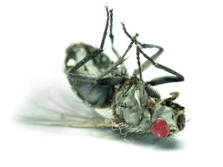beine spreizen: Ein Makro-Foto von einer Fliege - Insekten Lizenzfreie Bilder
