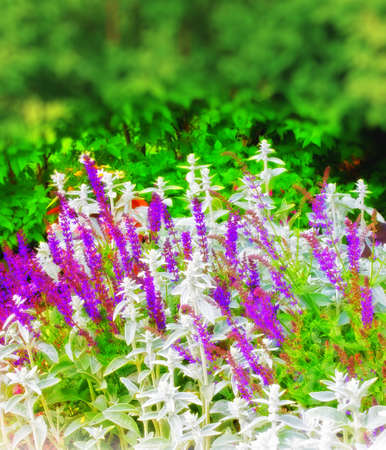 A colorful photo of Danish summer garden photo
