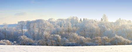 sleet: An outdoor photo of winter landscape beauty