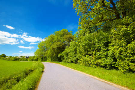 early summer: A road in the countryside - spring and early summer