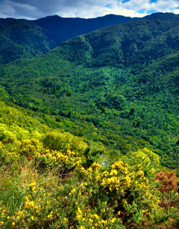 A photo of the rain forest in New Zealand photo