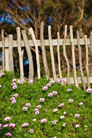 A photo of a fence, flowers, blue sky and garden Stock Photo - 11085880