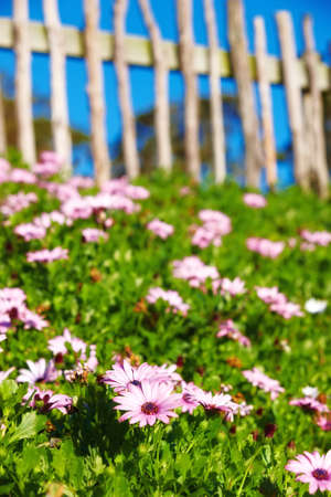 A photo of a fence, flowers, blue sky and garden Stock Photo - 11085738