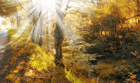 bike trail: A photo of Autumn forest and sunlight Stock Photo