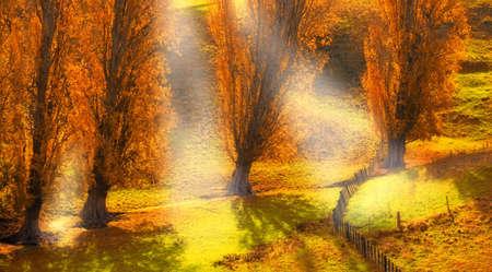 colores calidos: Una foto de los bosques de otoño y la luz del sol