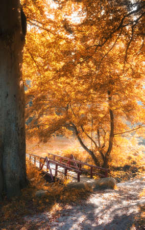A photo nature in the colors of autumn photo