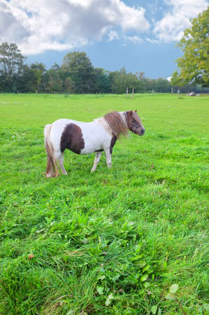 A photo ofSmall horses on a field photo