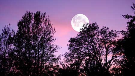 luz de luna: Una foto de la luna, la naturaleza y el paisaje