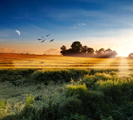 Ein Foto von Mond und Natur