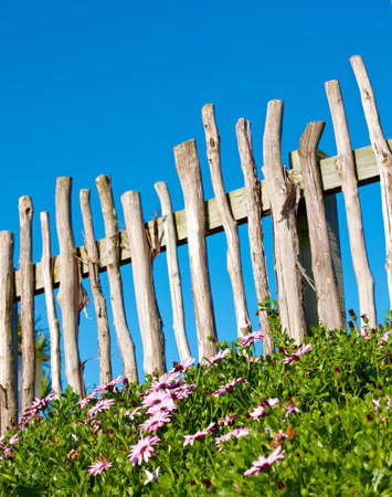 A photo of a fence, flowers, blue sky and garden photo