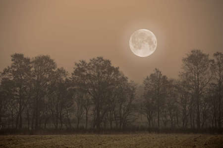 full moon romantic night: A  photo of the Moon and strees Stock Photo