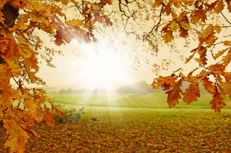 A  photo of Sunrise in autumn forest photo