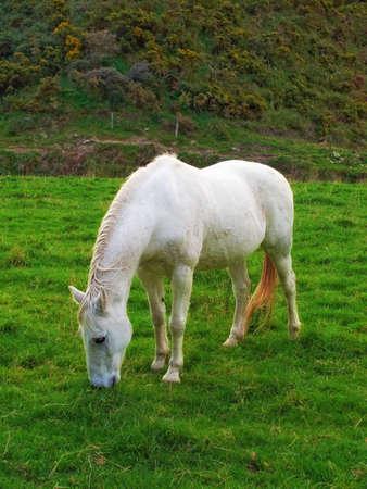 A photo of  a pony horse photo