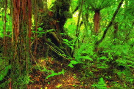 A photo from the rainforest - jungle photo