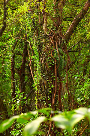 A photo from the rainforest - jungle Stock Photo - 11693615