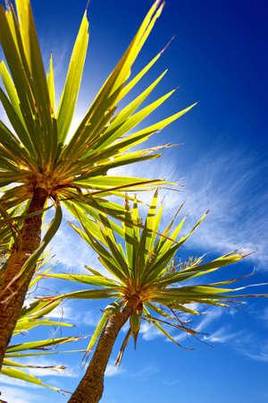 new zealand landscape: A photo of Palms and sky - New Zealand