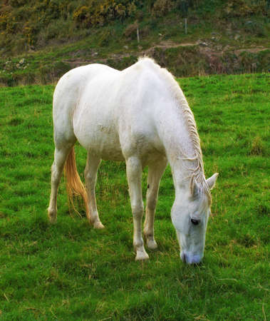 A photo of  a white pony photo