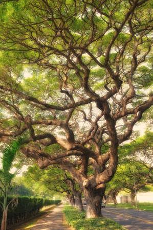 rainfall: A photo of Jungle trees in Honolulu