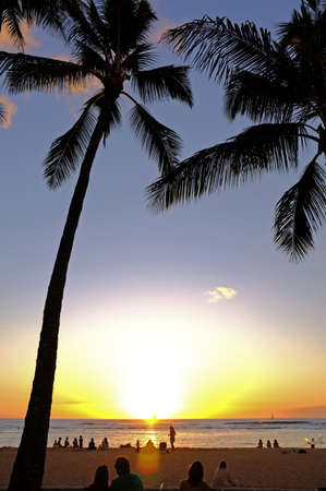 A photo of palms, ocean and suns in Waikiki, Hawaii Stock Photo - 12295495